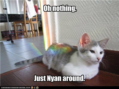 lazy,Nyan Cat