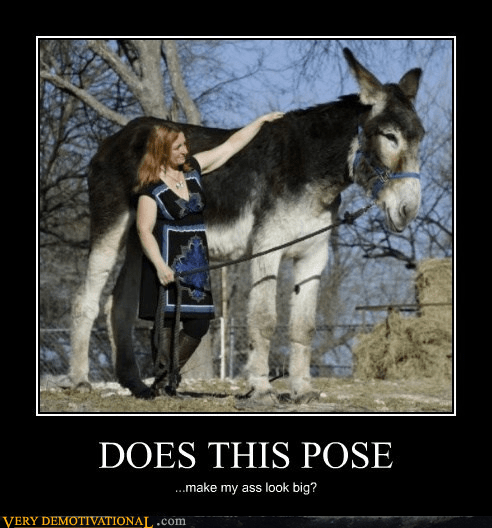 pose donkey huge