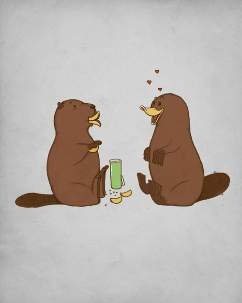 beaver platypus pringles true love dating - 7386624768