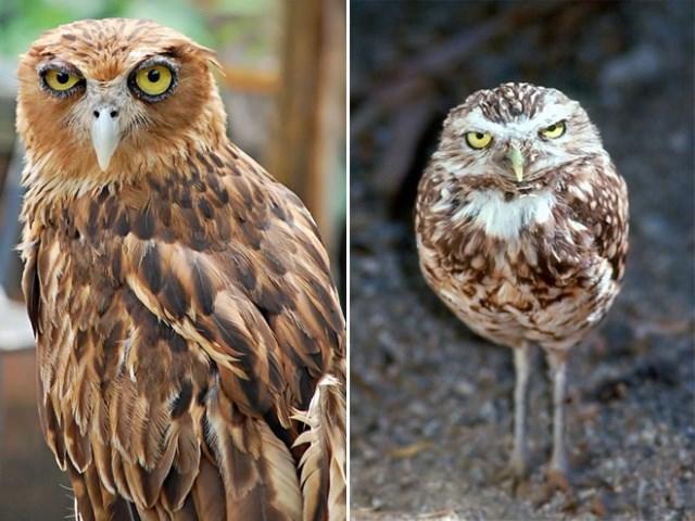 judging animal photos owls funny photos - 7386629
