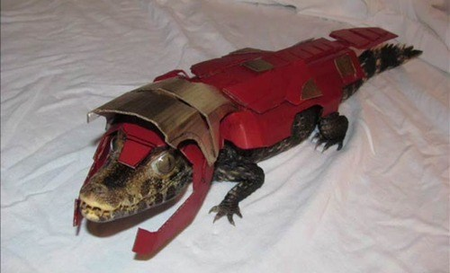 costume,iron man,aligator