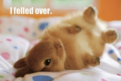 bunny,squee,fell