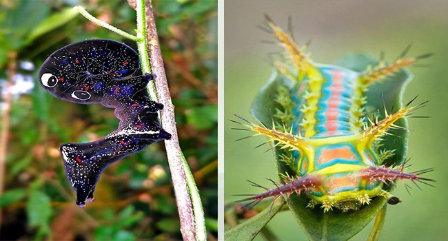 cool insects caterpillars interesting stunning moths caterpillar beautiful - 7387397