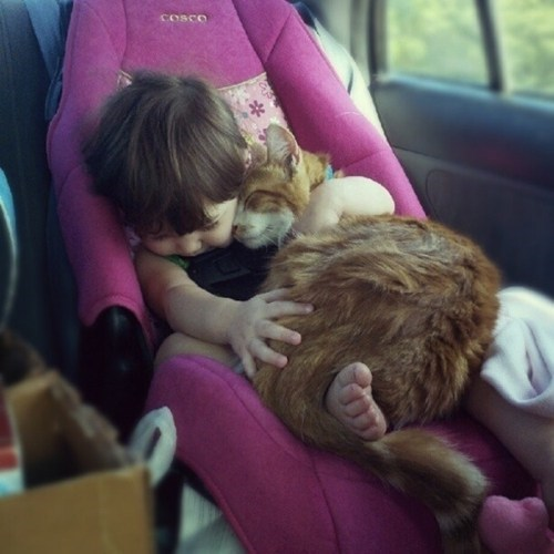 cuddle,car
