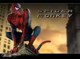 Spider-Man spider monkey - 7387609856
