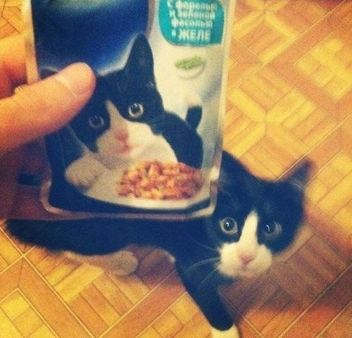 totally looks like,cat food,Cats