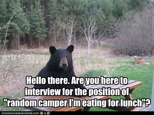 park,bear,lunch,camper