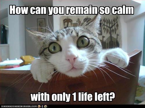 cat 9 lives - 7389638656