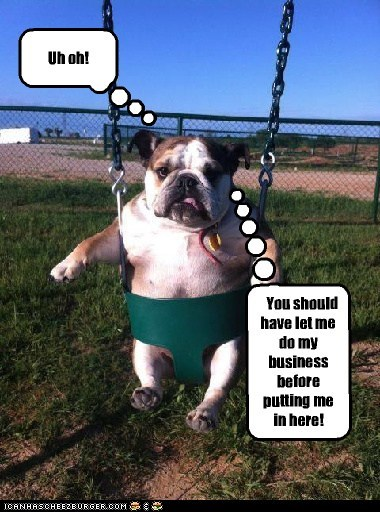 dogs swing bull dog funny - 7390727424