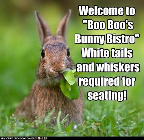 chomp,bunny