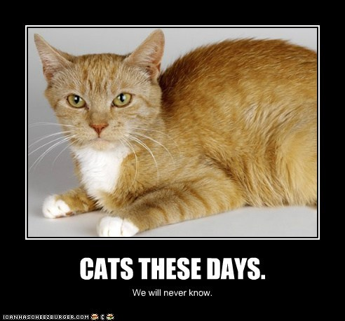 CATS THESE DAYS.