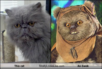 ewoks totally looks like Cats - 7393040128