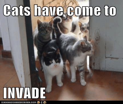 Image result for invading cats meme