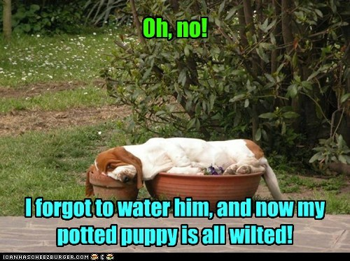 Oh, no! I forgot to water him, and now my potted puppy is all wilted!