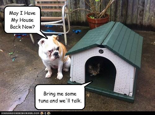 cat,tuna,doghouse
