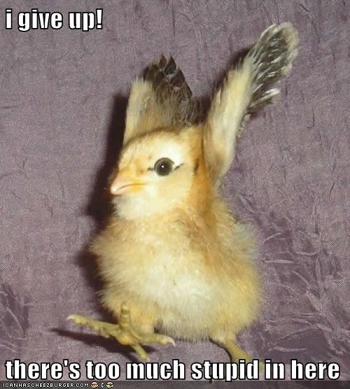 exasperated chick - 7395410176