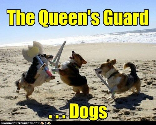 The Queen's Guard . . . Dogs