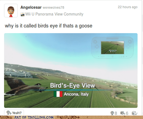 Italy birds geese wii U ancona - 7396981760