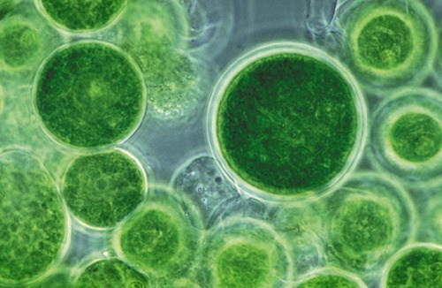 algae science biology - 7397423616