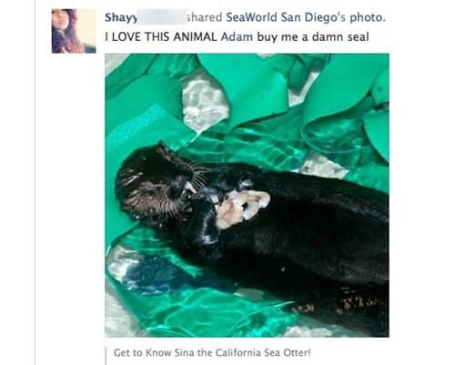 seals otters - 7397636864