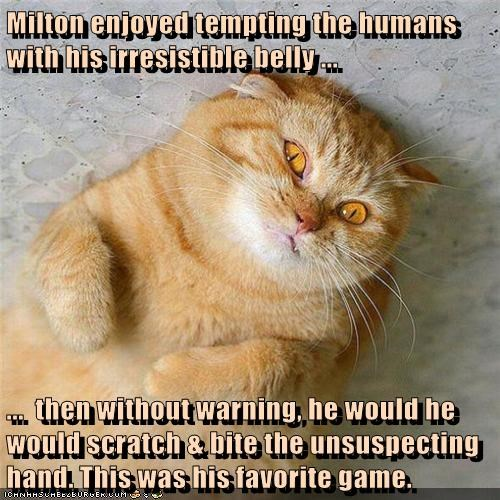Milton enjoyed tempting the humans with his irresistible belly ... ... then without warning, he would he would scratch & bite the unsuspecting hand. This was his favorite game.