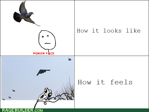 poker face,bird poop,pigeons