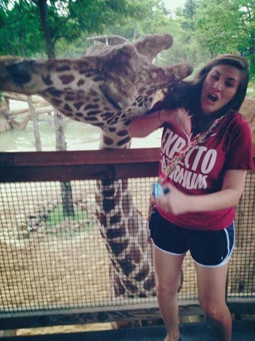 animals giraffes - 7400310016