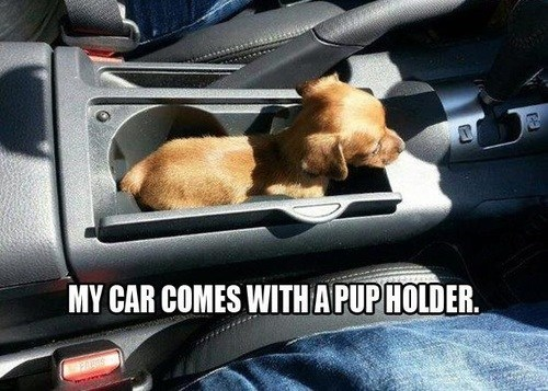 puppy,cup holder,dogs