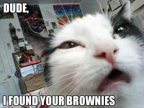 high,brownies,nip,derp,Cats