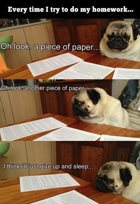 studying,homework,reading,sad but true,pugs