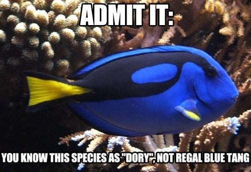 disney pixar finding nemo dory - 7401085696