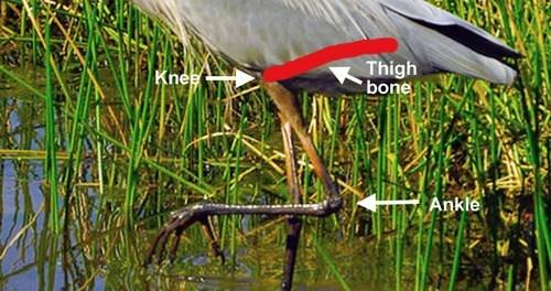 evolution birds walk science weird