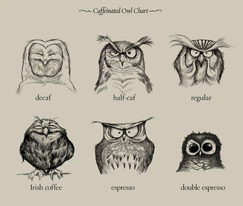 Chart,owls,coffee,monday thru friday,g rated