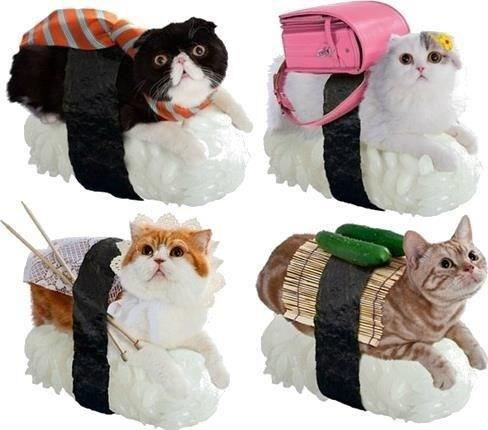 costume sushi - 7401659392