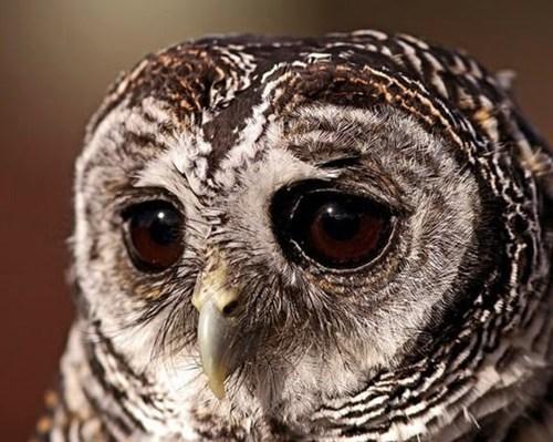 Sad,Owl
