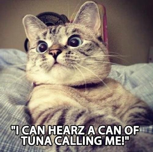 tuna noms - 7401795840