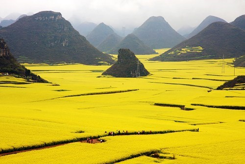 China,landscape,pretty colors,field