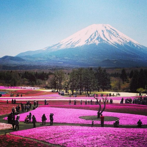 mt,Japan,landscape,fuji