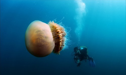 diving scuba ocean jellyfish
