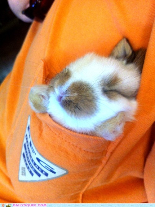 pocket,bunny