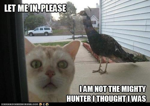 outside bird hunter - 7402325248