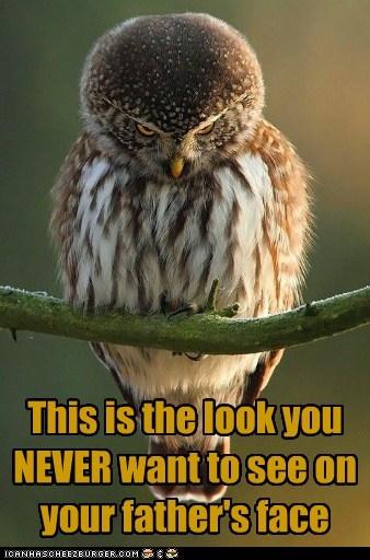 Owl dad trouble parents - 7402449408