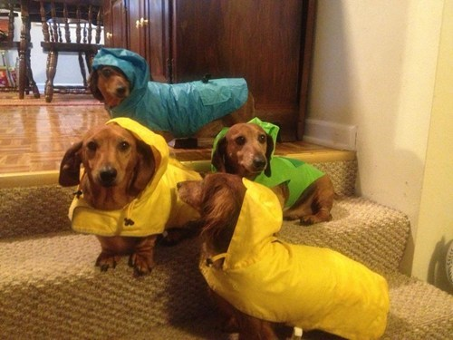 raincoats weenies protection