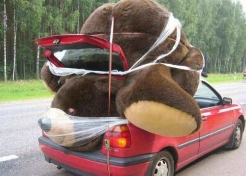 wtf,packing,teddy bears,cars