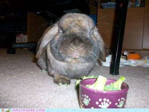 grumpy gimli bunny - 7407178496