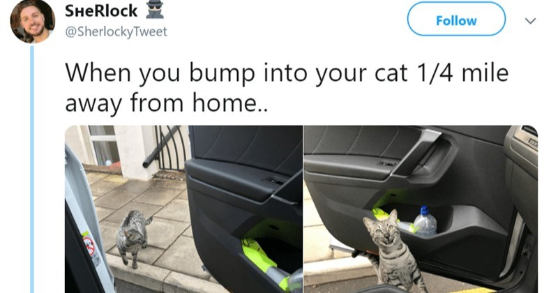 British funny tweets animal tweets - 7408645