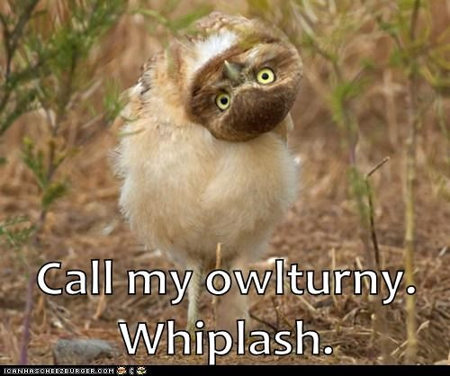 whiplash neck Owl