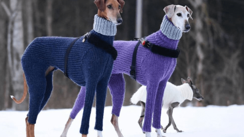 two dogs in matching knitted suits