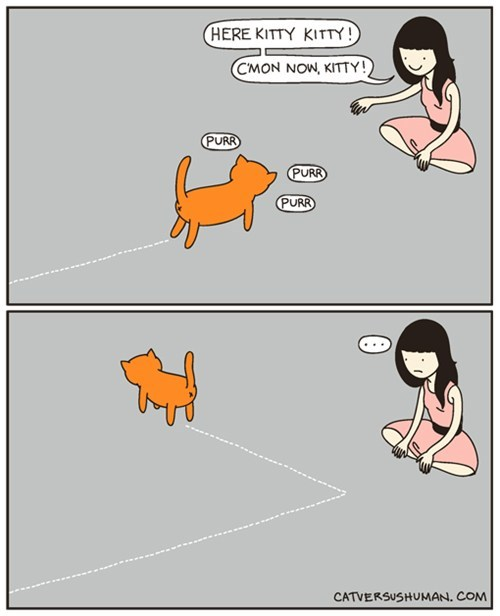 cat every time comic - 7410548224