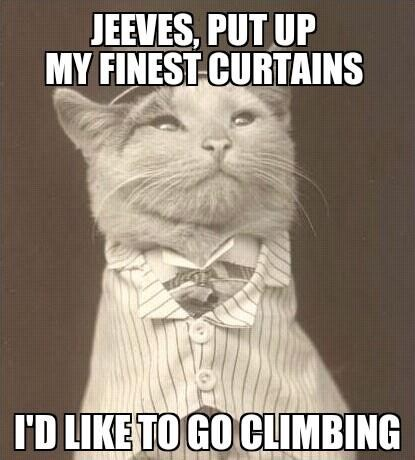 curtains,Aristocat,Cats